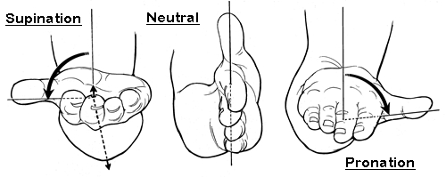 forearm-supination-pronation-hand